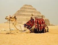 μπροστινή πυραμίδα καμηλών στοκ φωτογραφίες