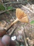 Μπροστινός μύκητας ναυπηγείων στοκ εικόνες