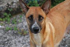 Μπροστινό σκυλί πλάγιας όψης Στοκ φωτογραφία με δικαίωμα ελεύθερης χρήσης