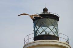 μπροστινό seagull φάρων Στοκ Εικόνες