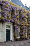 μπροστινό wisteria σπιτιών λουλ&omicro Στοκ εικόνα με δικαίωμα ελεύθερης χρήσης