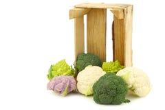 Μπρόκολο Romanesco, φρέσκο κουνουπίδι, πορφυρό κουνουπίδι και πράσινο μπρόκολο Στοκ Φωτογραφία