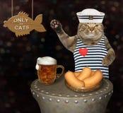 Μπύρα κατανάλωσης γατών στο μπαρ στοκ εικόνες με δικαίωμα ελεύθερης χρήσης