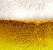μπύρα φρέσκια Στοκ Εικόνες