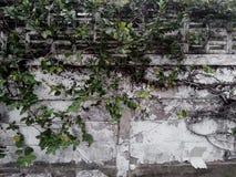 Μπλεγμένος τοίχος στοκ εικόνες