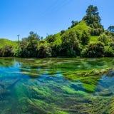 Μπλε άνοιξη που βρίσκεται στη διάβαση πεζών Te Waihou, Χάμιλτον Νέα Ζηλανδία Στοκ Φωτογραφίες