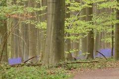 Μπλε δάσος άνοιξη Στοκ εικόνα με δικαίωμα ελεύθερης χρήσης