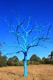 Μπλε δέντρο κάτω από το μπλε ουρανό Στοκ Φωτογραφίες