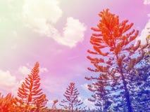 μπλε δέντρο ουρανού πεύκ&omega Στοκ φωτογραφία με δικαίωμα ελεύθερης χρήσης
