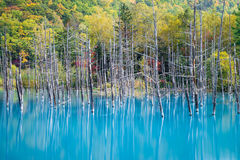 Μπλε λίμνη στο Hokkaido Στοκ Εικόνα