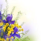 Μπλε ίριδες με τις κίτρινες μαργαρίτες Στοκ Φωτογραφίες