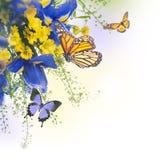 Μπλε ίριδες με τις κίτρινες μαργαρίτες Στοκ Εικόνα