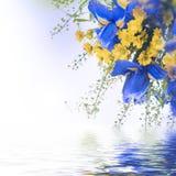 μπλε ίριδες Στοκ Φωτογραφίες