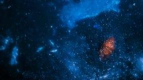 μπλε αστέρια απόθεμα βίντεο
