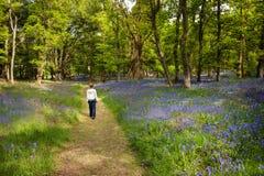Μπλε δασώδης περιοχή κουδουνιών Στοκ εικόνες με δικαίωμα ελεύθερης χρήσης