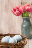 Μπλε αυγά Πάσχας σε μια φωλιά με τις ρόδινες τουλίπες στο υπόβαθρο Στοκ Εικόνες