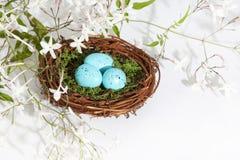 Μπλε αυγά 2 φωλιών Στοκ Φωτογραφίες