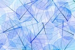 Μπλε αφηρημένο υπόβαθρο φύλλων Στοκ Εικόνα