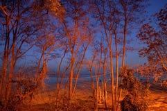 Μπλε βράδυ στο πάρκο Στοκ Φωτογραφίες