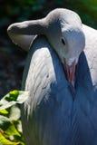 Μπλε γερανός στη φύση Στοκ φωτογραφίες με δικαίωμα ελεύθερης χρήσης