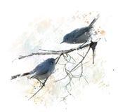 Μπλε-γκρίζο watercolor Gnatcatchers Στοκ Εικόνα