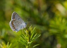 Μπλε γυρολόγων s Στοκ φωτογραφίες με δικαίωμα ελεύθερης χρήσης