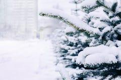 μπλε ερυθρελάτες χιον&iot Στοκ Εικόνα