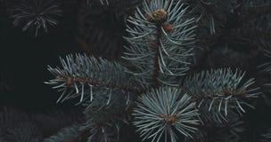 μπλε ερυθρελάτες Στοκ φωτογραφία με δικαίωμα ελεύθερης χρήσης