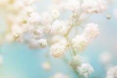μπλε λευκό λουλουδιών ανασκόπησης Στοκ Φωτογραφίες