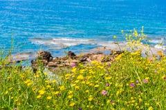 Μπλε θάλασσα και κίτρινα λουλούδια στη Σαρδηνία Στοκ εικόνες με δικαίωμα ελεύθερης χρήσης