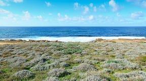 Μπλε θάλασσα και οι πράσινοι Μπους Στοκ φωτογραφία με δικαίωμα ελεύθερης χρήσης