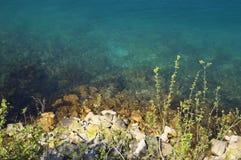 Μπλε θάλασσα με τις εγκαταστάσεις Στοκ Φωτογραφία