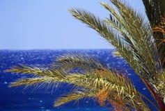 Μπλε θάλασσα, μπλε ουρανός και φοίνικας Στοκ Εικόνες