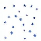 μπλε διάνυσμα απεικόνισης λουλουδιών ανασκόπησης Στοκ Εικόνα