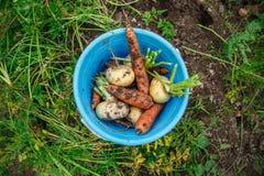 Μπλε κάδος με τα λαχανικά Στοκ εικόνα με δικαίωμα ελεύθερης χρήσης