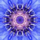 Μπλε κέντρο λουλουδιών Mandala Ομόκεντρο σχέδιο καλειδοσκόπιων Στοκ Εικόνες