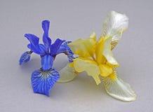 Μπλε κίτρινος φλεβών πετάλων οφθαλμών λουλουδιών της Iris Στοκ Εικόνα