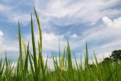Μπλε και άσπρα σύννεφα ουρανού ρυζιού Στοκ Εικόνα