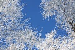 Μπλε και άσπρη φυσική σύσταση Στοκ Εικόνα