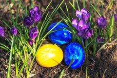 Αυγά Πάσχας μεταξύ των πορφυρών κρόκων Στοκ Εικόνες