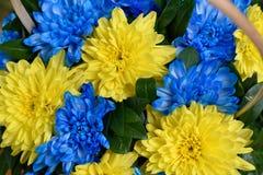 Μπλε και κίτρινα λωρίδες με τη χρωματισμένη κινηματογράφηση σε πρώτο πλάνο λουλουδιών Στοκ φωτογραφία με δικαίωμα ελεύθερης χρήσης