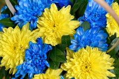 Μπλε και κίτρινα λωρίδες με τη χρωματισμένη κινηματογράφηση σε πρώτο πλάνο λουλουδιών Στοκ Εικόνα