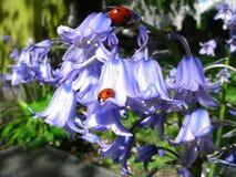 Μπλε και κόκκινο Στοκ εικόνα με δικαίωμα ελεύθερης χρήσης