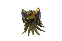Μπλε και χρυσός macaw που πετά στο άσπρο υπόβαθρο, πορεία ψαλιδίσματος Στοκ Εικόνα