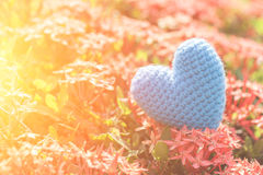 Μπλε καρδιά στο πράσινο δέντρο λουλουδιών ακίδων για την αγάπη και την ημέρα βαλεντίνων ` s Στοκ Εικόνα