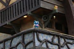 Μπλε κουκουβάγια, κίτρινη κουκουβάγια Στοκ Φωτογραφίες