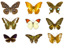 μπλε κόκκινο συλλογής πεταλούδων πεταλούδων κιβωτίων Στοκ εικόνες με δικαίωμα ελεύθερης χρήσης