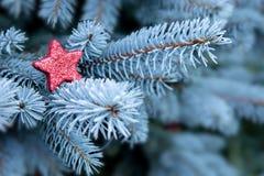 Μπλε κλάδοι πεύκων και κόκκινο αστέρι Χριστουγέννων Στοκ Φωτογραφίες