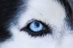 μπλε μάτι Στοκ Εικόνες