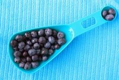 Μπλε μούρα στο μπλε κουτάλι Στοκ Εικόνες